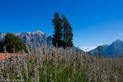 Lavender and mountains out front Llao Llao hotel